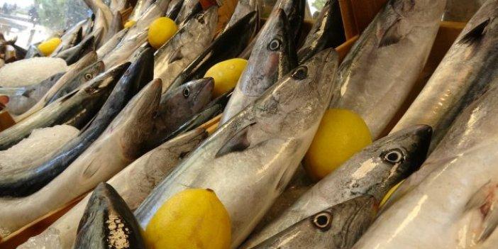 Palamut balığındaki bu hileye dikkat, denizlere de el attılar
