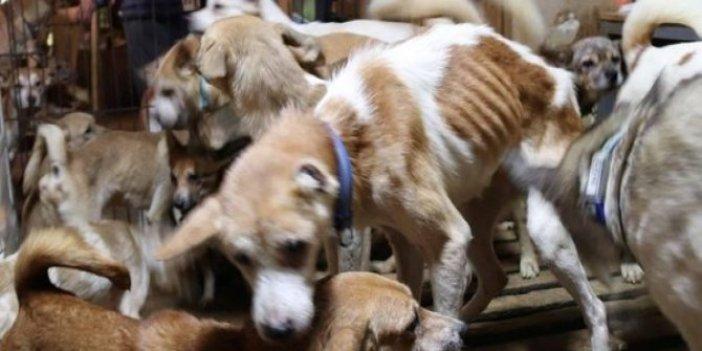 Japonya'da 30 metrekareden 164 köpek çıktı.Komşularının şikayeti ortaya çıkardı