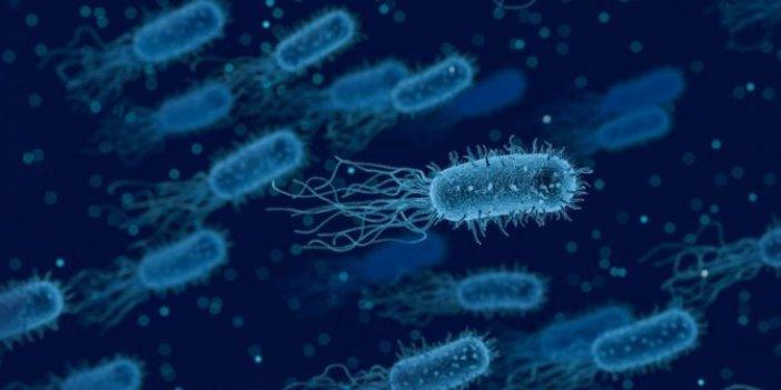 Dünyanın koronadan sonra yeni belası ortaya çıktı. Ölümcül bakteri hızla yayılıyor. 2020 sal artık