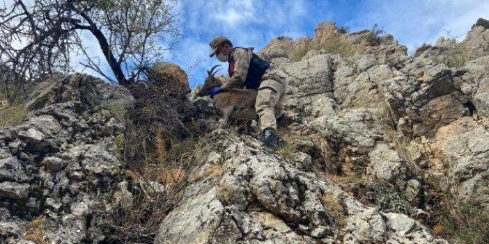 Mehmetçik kayalara tırmanıp kurtardı