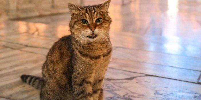 Ayasofya'nın kedisi Gli'den kötü haber