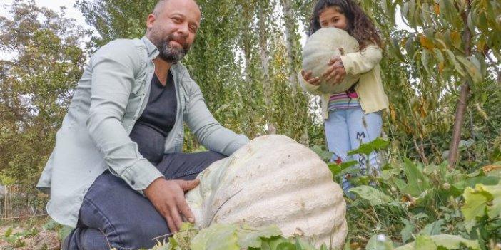 Mardin'de dev kabak yetiştirmenin sırrını verdi. Şehir hayatından sıkılıp memleketine dönmüştü