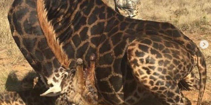 Nadir türleri öldüren avcının sözleri kan dondurdu