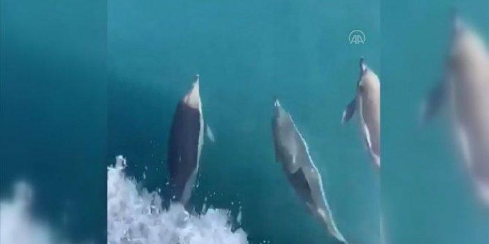 Yunusların balıkçı tekneleriyle yarışı mest etti