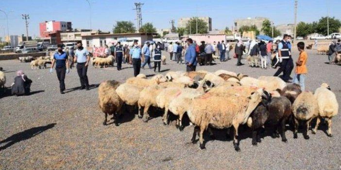 Hayvan pazarında iki grup arasındaki kavga kanlı bitti