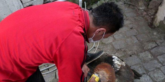 Kestiği ağacın gövdesine bakınca gözleri adeta yuvasından fırladı. Trabzon bu olayı konuşuyor