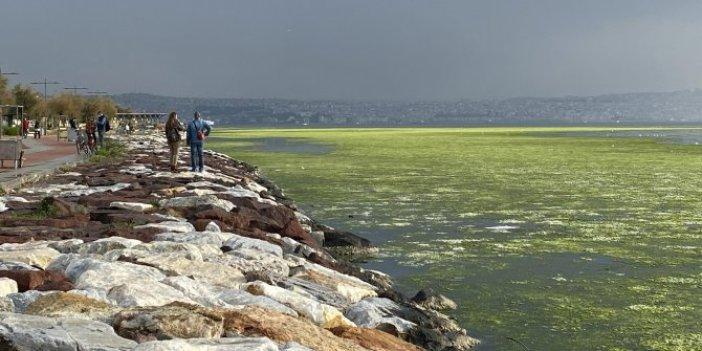 İzmir'de sahil deniz maruluyla kaplandı