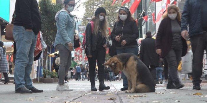İzmit'te sürekli mazgalı izleyen köpeğin sırrı çözüldü