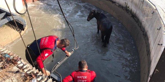 Denizli'de su kanalına düşen at itfaiye ekiplerinin çabası ile kurtarıldı