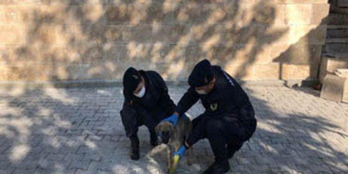 Yavru köpeğin yardımına jandarma koştu