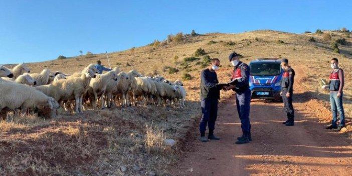 Jandarmadan koyun operasyonu