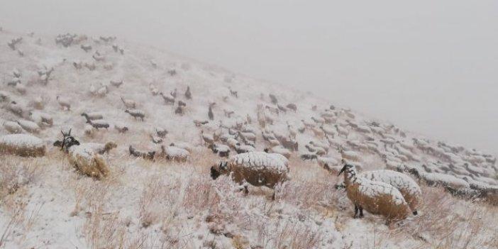 Hakkari'de koyunlar beyaza büründü. Çoban ile sürünün zor anları