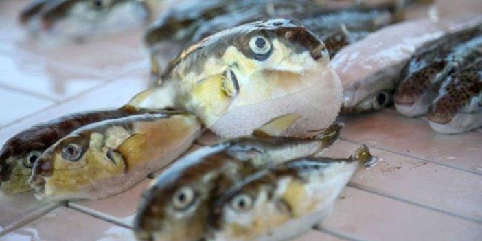 Bakanlık bu balığın peşine düştü, işte kuyruk başına verilecek ödül