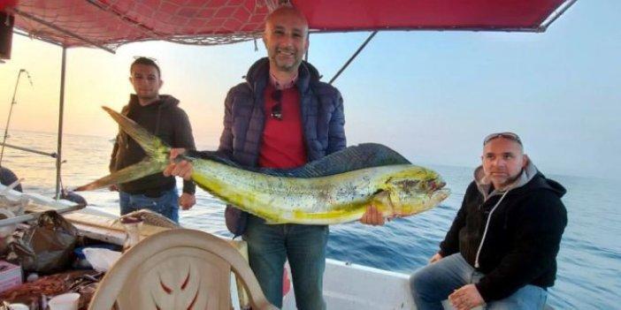 Amatör balıkçı özel yapım oltayla yakaladı. Okyanusları aşıp geldi Aydın'da avlandı
