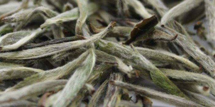 Grip ve soğuk algınlığına derman oluyor. Hastalık savar besinler şifa deposu