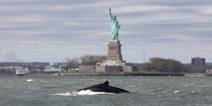 Uzmanları hayrete düşüren olay. Hudson Nehri'nde yıllar sonra ilk kez kambur balina görüldü