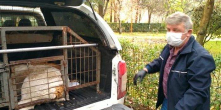 3 köpeğin öldürülmesine ilişkin personeller açığa alındı