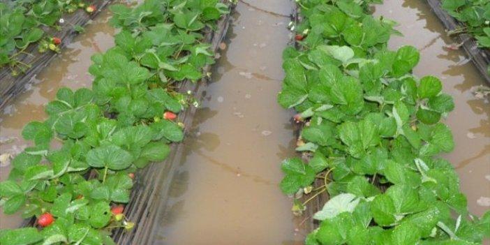 Antalya'da şiddetli yağış seraları etkiledi