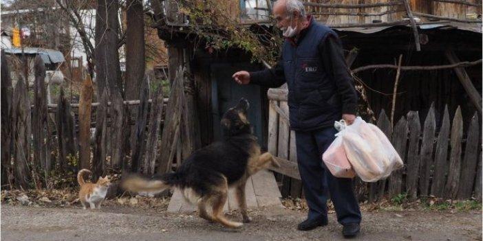 Hayvanların sevgilisi Satılmış İncedere, kedi ve köpekleri beslemek için her gün 10 kilometre yürüyor