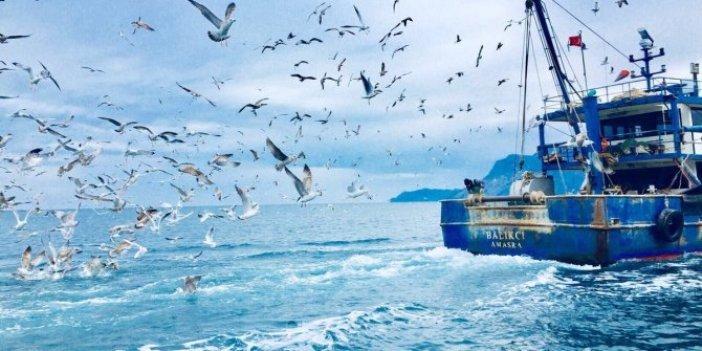 Karadeniz'den balıkçılar kötü haber. Olması gerekenden 5 derece daha sıcak