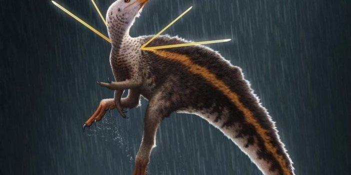 Bilim insanları şaşkın! 110 milyon yıllık Tavuk boyutunda yeni bir dinozor türü keşfedildi