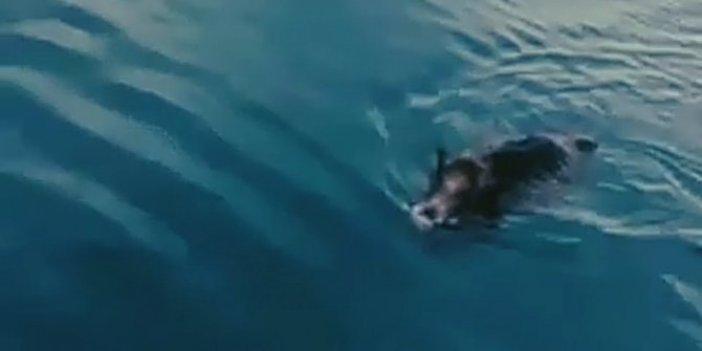 Van Gölü'nde aniden ortaya çıktı. Balıkçıların nutku tutuldu