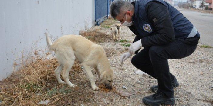 Polisler, köpekleri elleri ile besledi