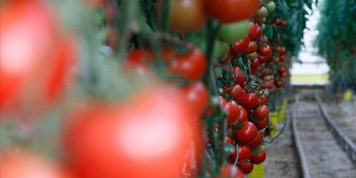 Ege'den yapılan yaş meyve sebze ihracatı rekor kırdı