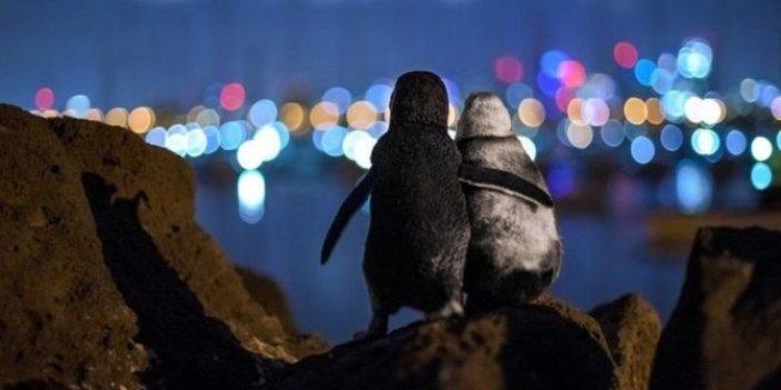 Dul penguenlerin dayanışması. Yılın fotoğrafı çekildi