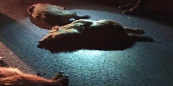 11 domuzu öldürüp kaçtı