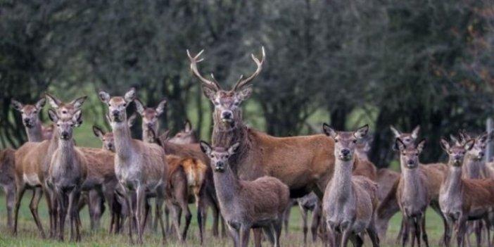Portekiz'de hayvan katliamı
