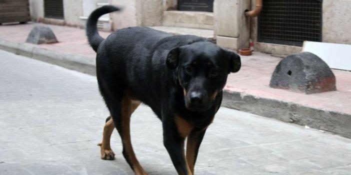 Beyoğlu'nda köpek aniden adamı kovalamaya başladı gerçek ise bambaşka çıktı, arkasından seslenirken fark ettiler