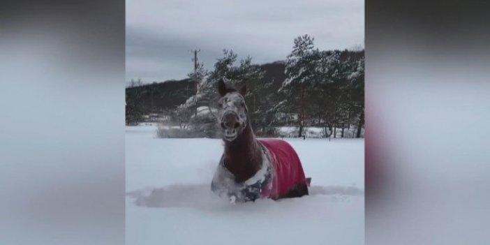ABD'de kar keyfi yapan atın görüntüleri ilgi gördü