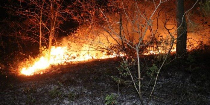Vatandaşlar seferber oldu.Sakarya'daki orman yangını söndürüldü