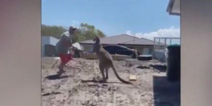 Avustralyalı adam kangurudan yediği yumrukla feleği şaştı. Bir seksen yere serdi
