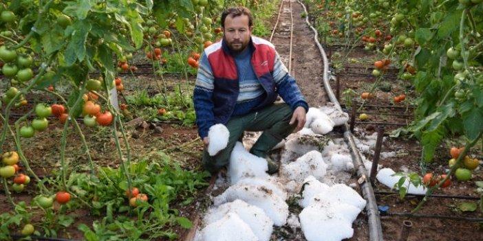 Antalya'da yağış ve soğuk hava seralara zarar verdi