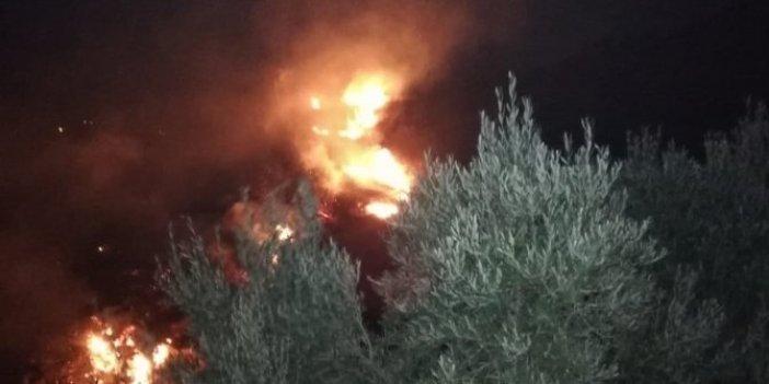 Hatay'da zeytinlik alandaki yangın 3 saat sonra söndürülebildi