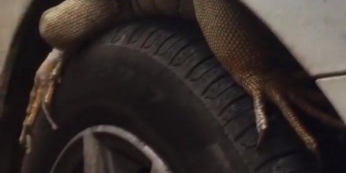 Antalya'da inanılmaz olay. Arabasının lastiği üzerinde pençeyi görünce şaşkına döndü