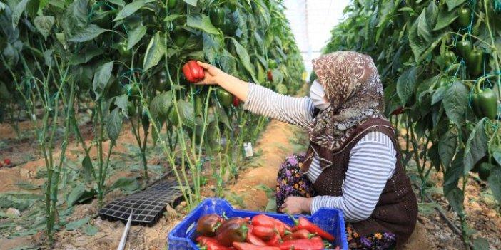 Antalya'da üretim yasaklarda da hız kesmiyor