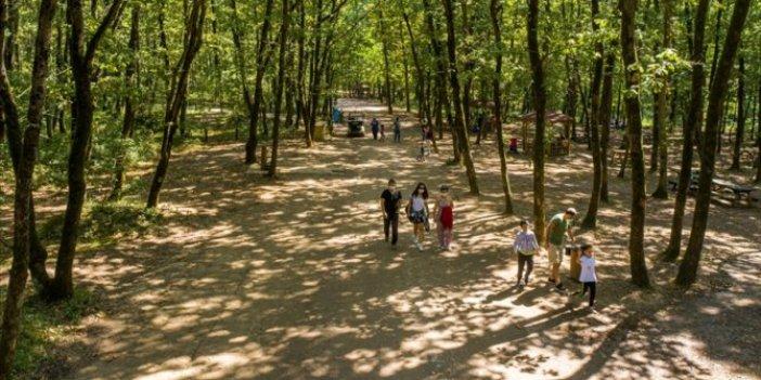 Ormanya'ya 5 milyon ziyaretçi