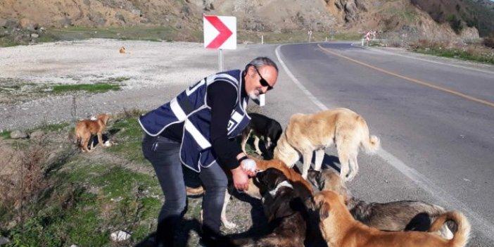 Türk polisi yasaklarda aç kalan hayvanları unutmadı