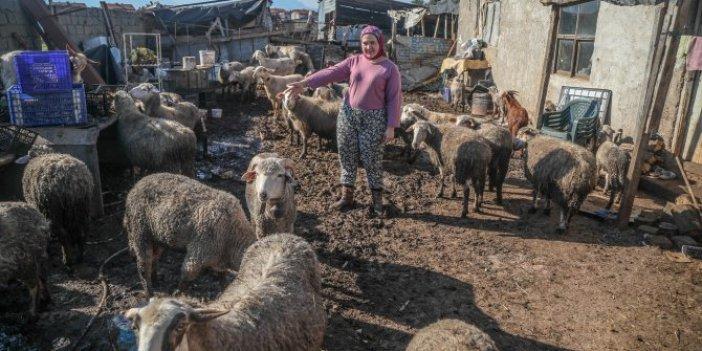 Antalya'da otlayan koyunlar titreyerek yere yığıldı. Feryat eden besici kadın suçladı