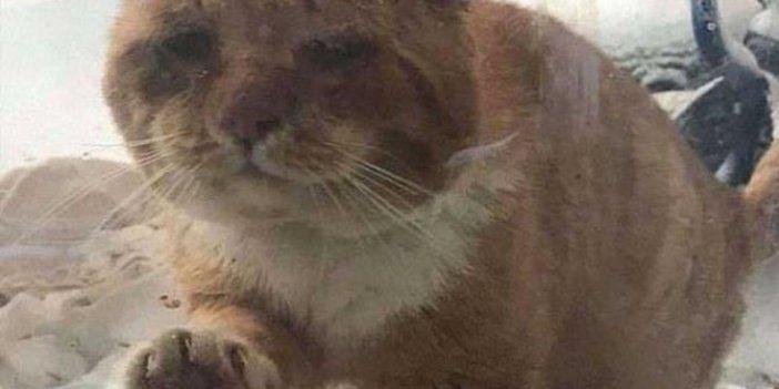 Dünyayı iyilik kurtaracak. Donmak üzere olan kedi bakın nasıl hayatta kaldı