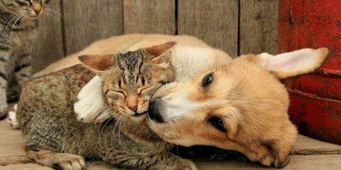 Kedi ve köpek fotoğraflarıyla yüzlerce insanı binlerce lira dolandırdı