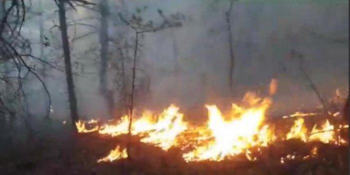 Borçka'da ormanlık alanda başlayan yangın rüzgarın etkisiyle büyüdü
