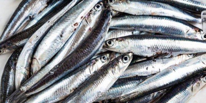 İstanbul Boğazı ve Karadeniz'de Hamsi avı yasaklandı
