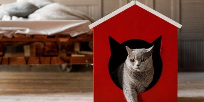 Kedi sahiplerinin tedirgin olduğu konu için adım atıldı. Kediler için Kovid-19 aşısı geliyor