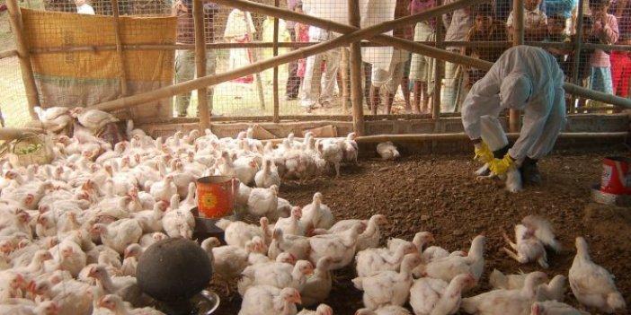 Hindistan'da kuş gribi alarmı