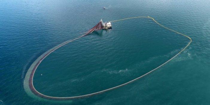 Karadeniz'de bir ilk. Balıklar ters yöne göç etmeye başladı