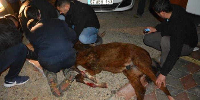Ahırdan kaçan anne at ile yavrusunu ölüm ayırdı. O anlar kameraya yansıdı